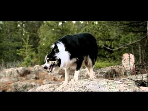 Lost Dog Records - Kickstarter