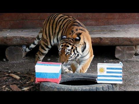 Россия—Уругвай: перед матчем // 25.06.18 // Настоящий футбол