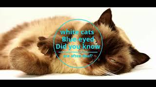 Fun Facts About Your Pet That You Didn't Know About