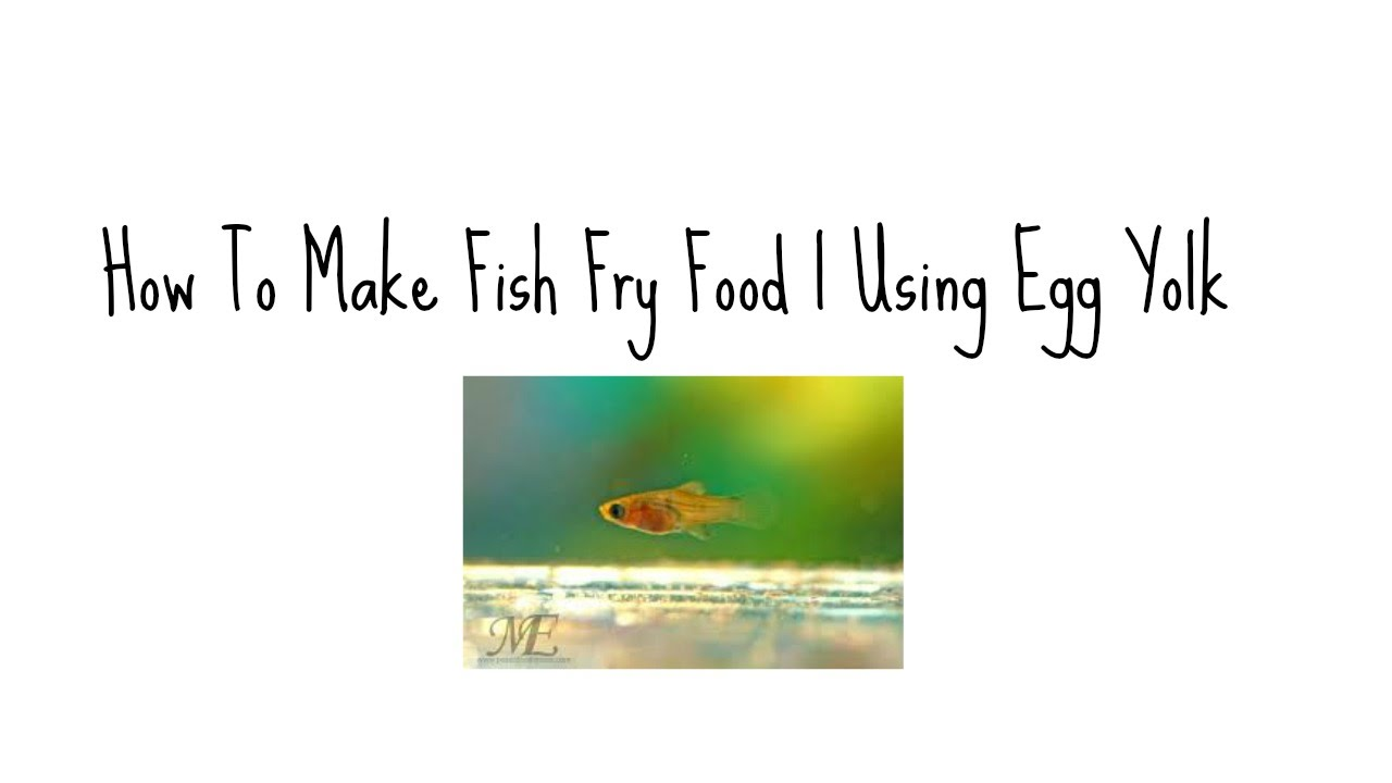 How to make fish fry food using egg yolk youtube for How to make fish fry