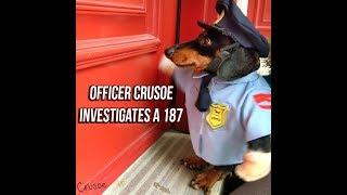Officer Crusoe Dachshund on Duty: Investigates 187
