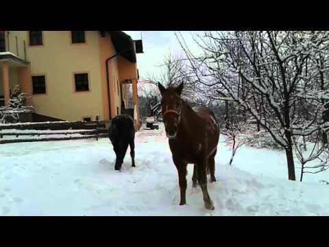 雪に喜ぶ馬たち♪はしゃいでゴロゴロ寝転がります。