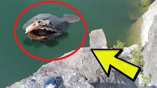 23 Weird and Scary Creature Pictures