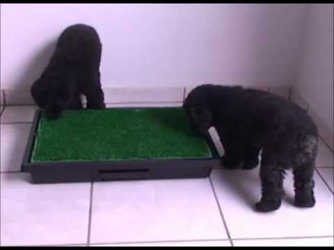 Ecopatio Pet - Sanitário Canino Inteligente com Grama