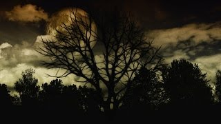 HAUNTED FOREST ◣_◢ Scary Sounds of Ghosts in the Darkness 🎧 2 HOURS