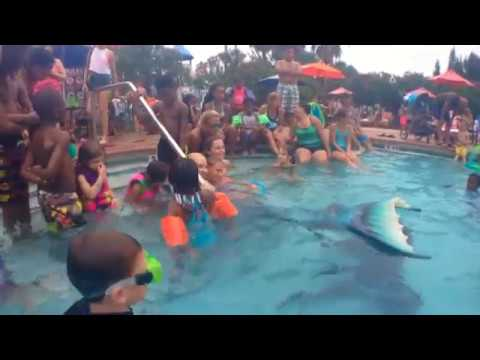 Live Mermaid swims & performs for kids at resort pool: underwater footage