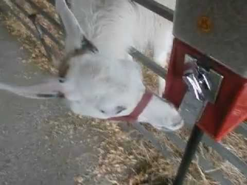 llama wont let mom get food