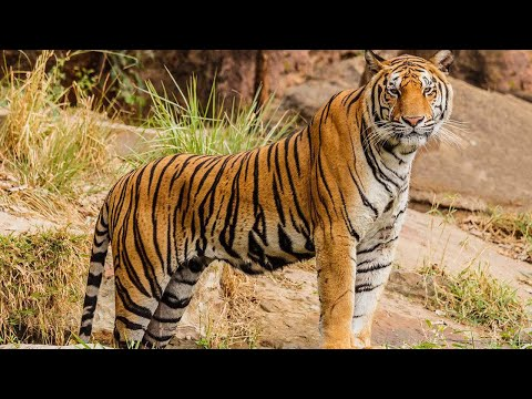 Rajasthan Tour: Animals at Jaipur Zoo