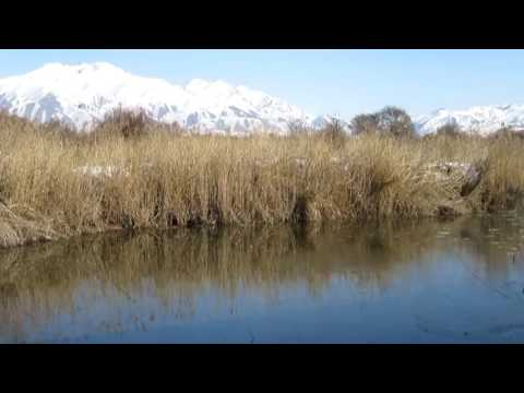 Форелевое хозяйство в Чон Кемине|  Gold Fish обзор