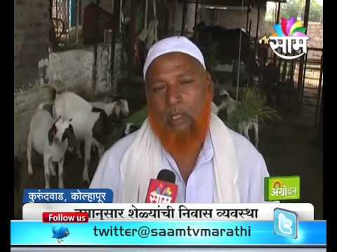Success story of Kolhapur's Ahmed and Imran brother's goat farming