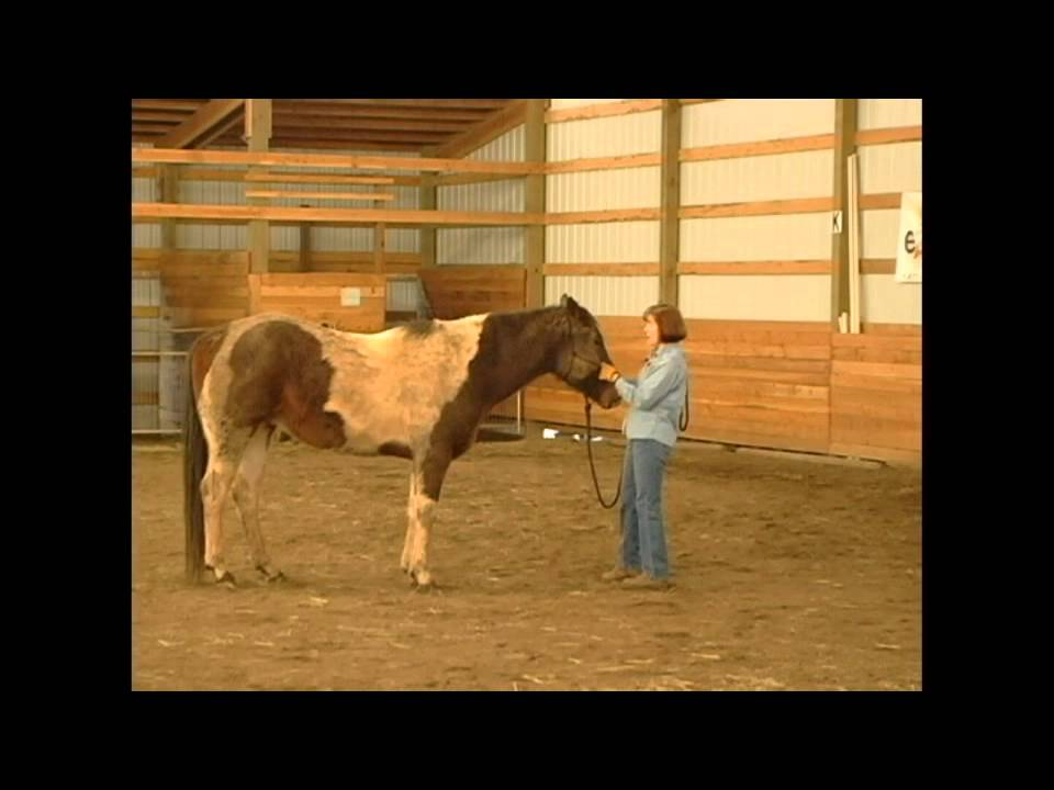 Should You Blanket Your Horse?