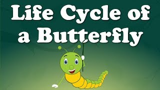 Life Cycle of a Butterfly  | Science & Technology News | Fact Videos