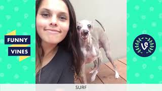 Funny Animals Vines V2 March 2018 Compilation   Cute Pets, Dogs, Birds, Cats Videos Monthly Montage