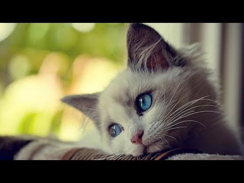 Что чувствуют кошки, когда их обижают ?