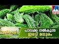 Model Farming Of Vellanikkara  Manorama News  Nattupacha
