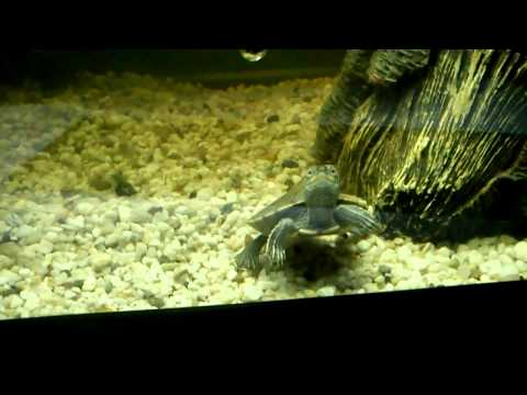 turtle tank waterfall