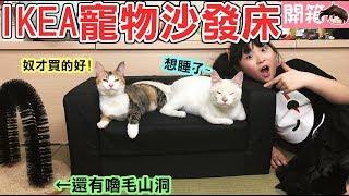 【開箱】IKEA寵物沙發床及網購嚕毛山洞貓咪們會喜歡嗎?[NyoNyoTV妞妞TV玩具]