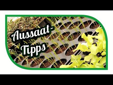 Aussaat Tipps | Jungpflanzenanzucht im April | Gemüse erfolgreich anbauen
