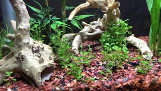 Guide: for keeping a shrimp tank