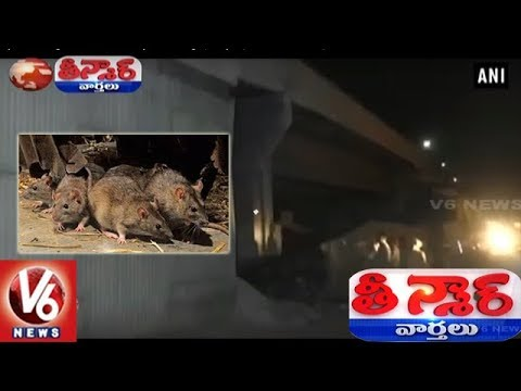 Mighty Rats Bring Down Ludhiana Fly-Over Bridge | Punjab | Teenmaar News | V6 News