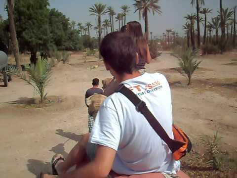 Paseo en dromedario por el Palmeral de las afueras de Marrakech