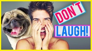 TRY NOT TO LAUGH CHALLENGE! - ANIMAL FAILS!