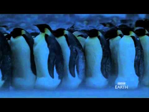 Emperor Penguins in Antarctica - BBC Planet Earth