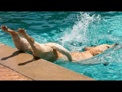 TRY TO WATCH THESE ANIMALS WITHOUT LAUGHING - Funny animals vs water compilation