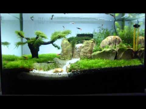 Aquascape Waterfall In Tank Avi Youtube