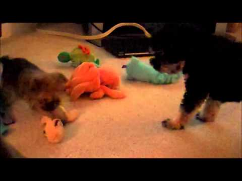 Baby And Squirt (playing Hard For The First Time.) -part 2- video