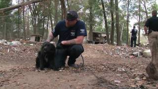 Alabama Animal Hoarding Rescue