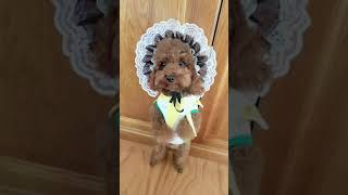 Look at these cute and funny puppies dogs 3247