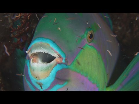 Bunaken Night Dive HD