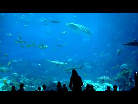 The Largest Aquarium in the World - Georgia Aquarium