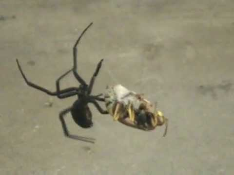 Black Widow Vs. Wasp, The Final Battle Video