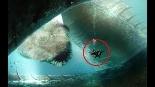 RAREST Sharks In The World!