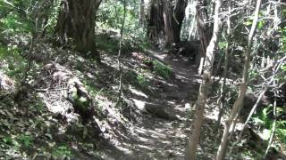 A Fucking Forest Video