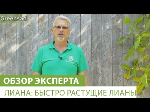 Лиана: Быстро растущие лианы
