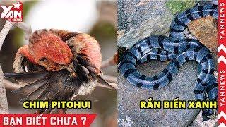 Top 5 Loài Vật Có Nọc Độc Nguy Hiểm Nhất Thế Giới