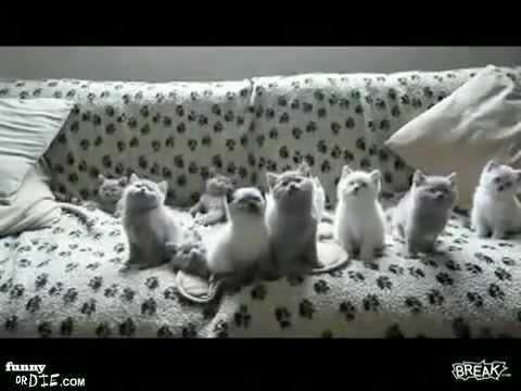 חתולים רוקדים סרטון מדהים