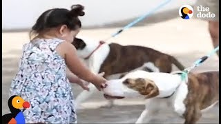 Girl Reunites With Dogs After Hurricane Harvey | The Dodo