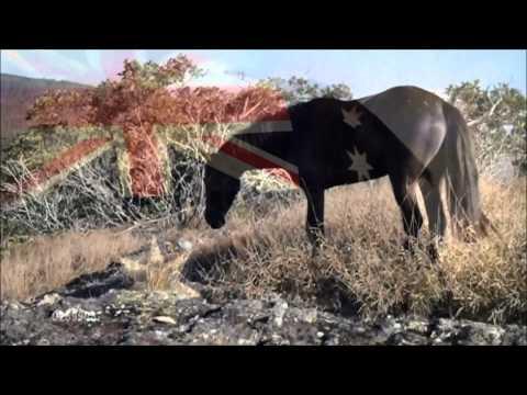 Why Cull?? Its so dam cruel! Austalia's horses deserve better!!