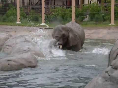 Elephant enjoys water at Cleveland Metroparks Zoo