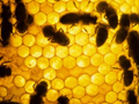A Plea for Bees' Needs: Dr. Elizabeth Elle