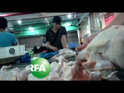 Dead Meat: How Carcasses from Diseased Poultry Enter China's Food Chain