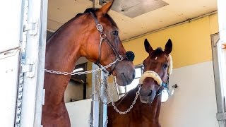 Rio 2016: Giving Horses Wings to Compete