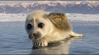 Cutest Wild Baby Animals Ever