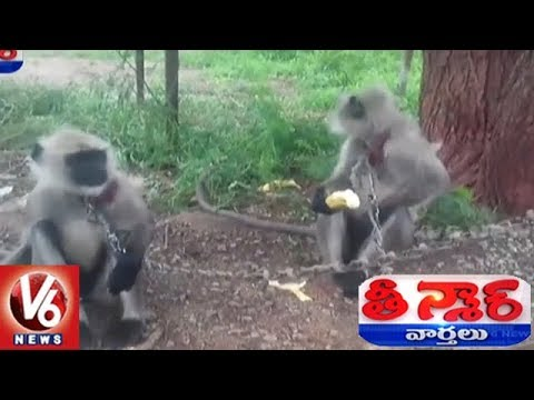 Telangana Police Recruits 2 Langurs To Curb Moneky Menace At TSPA | Teenmaar News