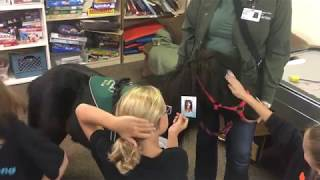 Therapy animals visit students who lost homes in the Tubbs fire