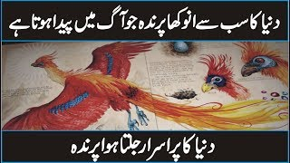 What is Phoenix or Fire Bird in Urdu Hindi | Discover The World